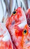 新鲜的红大马哈鱼和其他海鲜在市场上在摩洛哥准备好为 免版税库存照片