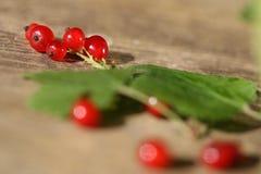 新鲜的红浆果 免版税库存图片