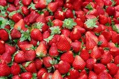 新鲜的红色成熟草莓 免版税库存图片