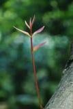 新鲜的红色新芽 免版税图库摄影