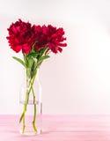 新鲜的红色牡丹花 免版税库存照片