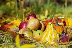新鲜的红色苹果、南瓜和秋叶在秋天从事园艺 库存图片