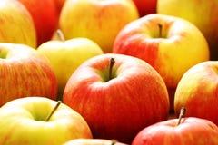 新鲜的红色苹果关闭宏指令 库存照片