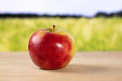 新鲜的红色苹果詹姆斯追悼与后边领域 免版税库存照片