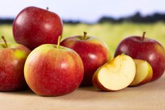 新鲜的红色苹果詹姆斯追悼与后边领域 图库摄影