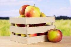 新鲜的红色苹果詹姆斯追悼与后边领域 库存照片