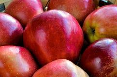 新鲜的红色苹果 图库摄影