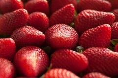 新鲜的红色草莓 库存图片