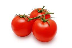 新鲜的红色蕃茄 库存图片