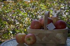 新鲜的红色采撷苹果门篮子  库存图片