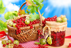 新鲜的红色,白色无核小葡萄干、鹅莓和瓶子篮子preserv 免版税库存照片