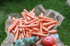 新鲜的红萝卜和其他菜在草 库存图片