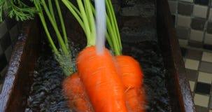 新鲜的红萝卜,水槽在厨房里,红萝卜,维生素,人的重要菜, 影视素材