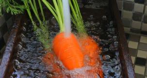 新鲜的红萝卜,水槽在厨房里,红萝卜,维生素,人的重要菜, 股票视频