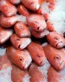 新鲜的红鲷鱼 库存图片