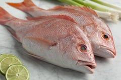 新鲜的红鲷鱼 免版税库存照片