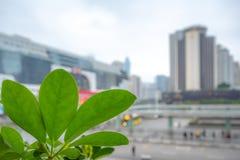 新鲜的绿色叶子特写镜头在被弄脏的商业区的在背景的guanzhou中间地区 库存图片