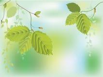 新鲜的绿色叶子 库存例证