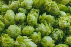 新鲜的绿色啤酒花球果树宏观射击  图库摄影