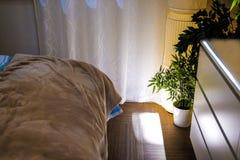 新鲜的绿色在现代卧室内部的爱树木的人木在木床上的罐与米黄床单和坐垫 图库摄影