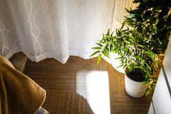 新鲜的绿色在现代卧室内部的爱树木的人木在木床上的罐与米黄床单和坐垫 库存照片
