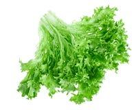 新鲜的绿色散叶莴苣 免版税库存图片