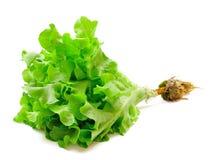 新鲜的绿色散叶莴苣 库存照片