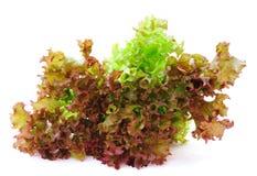新鲜的绿色散叶莴苣 库存图片