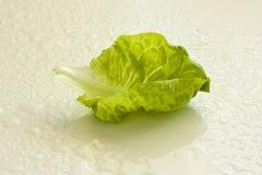 新鲜的绿色散叶莴苣 免版税库存照片