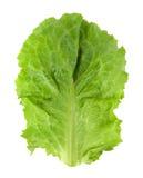 新鲜的绿色查出的莴苣 免版税库存图片