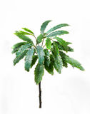 新鲜的绿色植物 免版税库存照片
