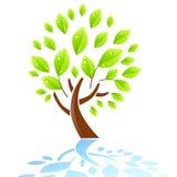 新鲜的绿色结构树 库存例证