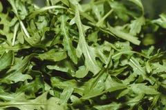 新鲜的绿色芝麻菜宏观特写镜头水平的照片射击了背景 免版税库存照片