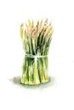 新鲜的绿色芦笋 免版税图库摄影