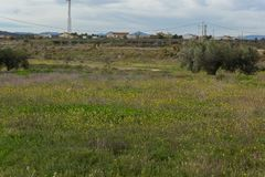 新鲜的绿色草甸 图库摄影