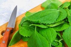 新鲜的绿色荨麻叶子在一个切口木板的有在一张灰色具体桌上的一把刀子的 免版税库存照片