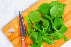 新鲜的绿色荨麻叶子在一个切口木板的有在一张灰色具体桌上的一把刀子的 库存照片