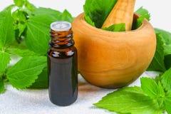 新鲜的绿色荨麻和一个小瓶叶子医疗荨麻在一张灰色具体桌上油 免版税库存图片