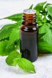 新鲜的绿色荨麻和一个小瓶叶子医疗荨麻在一张灰色具体桌上油 免版税库存照片