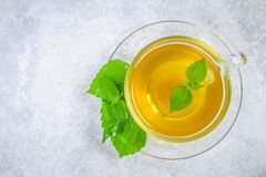 新鲜的绿色荨麻和一个清楚的玻璃杯子叶子在一张灰色具体桌上的草本荨麻茶 顶视图 免版税库存图片