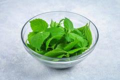 新鲜的绿色荨麻,在一个玻璃碗的沙拉叶子在一张灰色具体桌上 库存图片