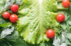 新鲜的绿色莴苣沙拉叶子 免版税库存图片