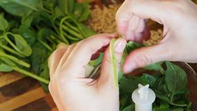 新鲜的绿色蓬蒿的准备为烹调Pesto离开 股票视频