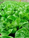 新鲜的绿色蔬菜 库存照片