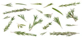新鲜的绿色迷迭香叶子和枝杈在不同的角度在whi 免版税库存图片