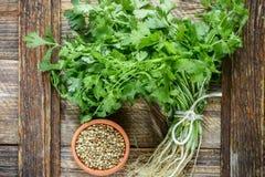 新鲜的绿色香菜、香菜叶子和干燥种子 图库摄影