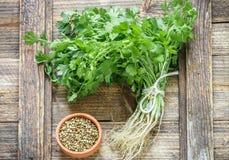 新鲜的绿色香菜、香菜叶子和干燥种子 免版税库存图片
