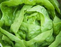 新鲜的绿色莴苣沙拉 免版税库存照片