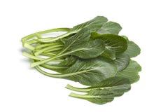 新鲜的绿色Komatsuna叶子 免版税库存照片