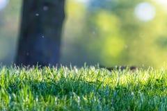 新鲜的绿草在一个公园有抽象绿色背景 库存图片